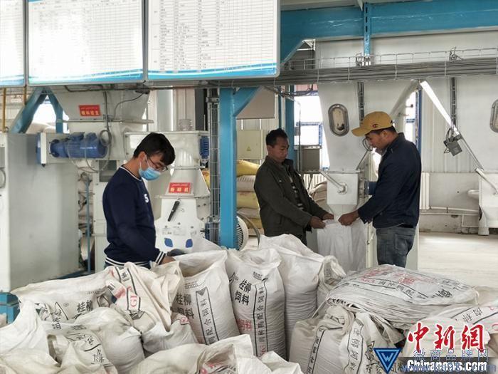 在皮山县兰干村产业园区的扶贫车间里,员工忙着加工饲草料。 石莹莹 摄