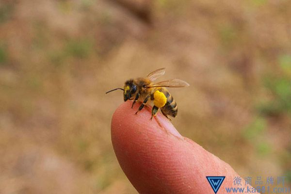 被蜜蜂蛰了怎么办消肿止痛