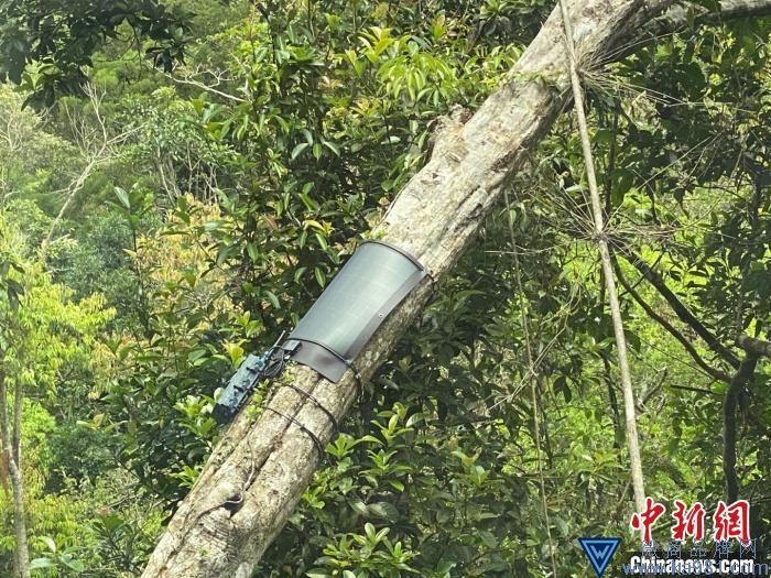 海南推进热带雨林国家公园试点:生态质量不断提升 人与自然更加和谐