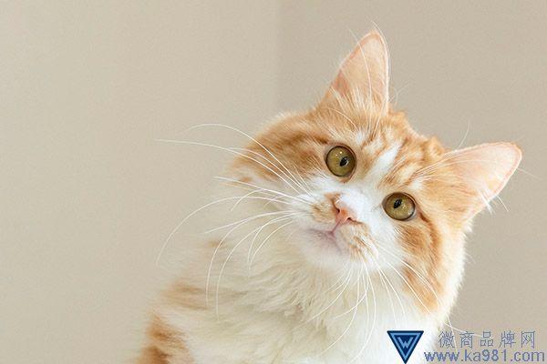 猫挠出血不打针有事吗