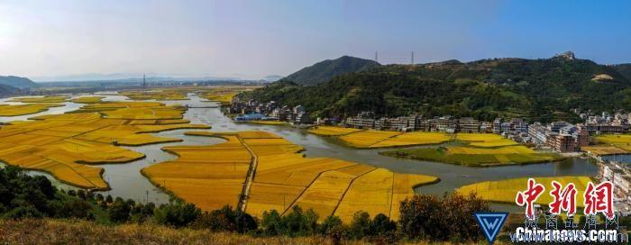 浙江台州年度粮食生产政策出台 计划总产量10.26亿斤